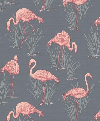 Flamingo Wallpaper Flamboyant Eye Catching Wow